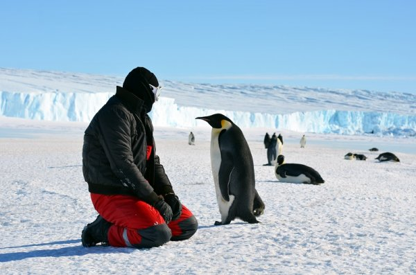 The Best Places In The World To Go Penguin Spotting
